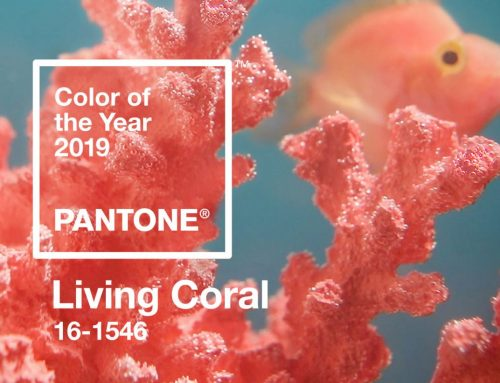 Living Coral, Living Life