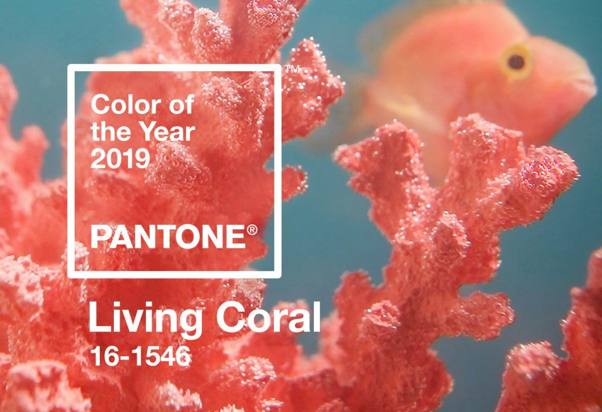 Living Coral & Living Life